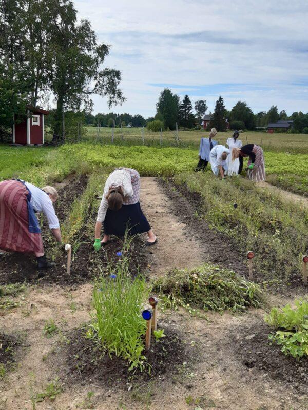 Kuvassa torpan piiat nyppivät rikkaruohoja torpan kasvimaalta